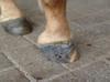 Paardenvoeten