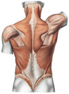 Fysiotherapeut